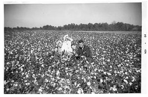 johnsons in a cotton field